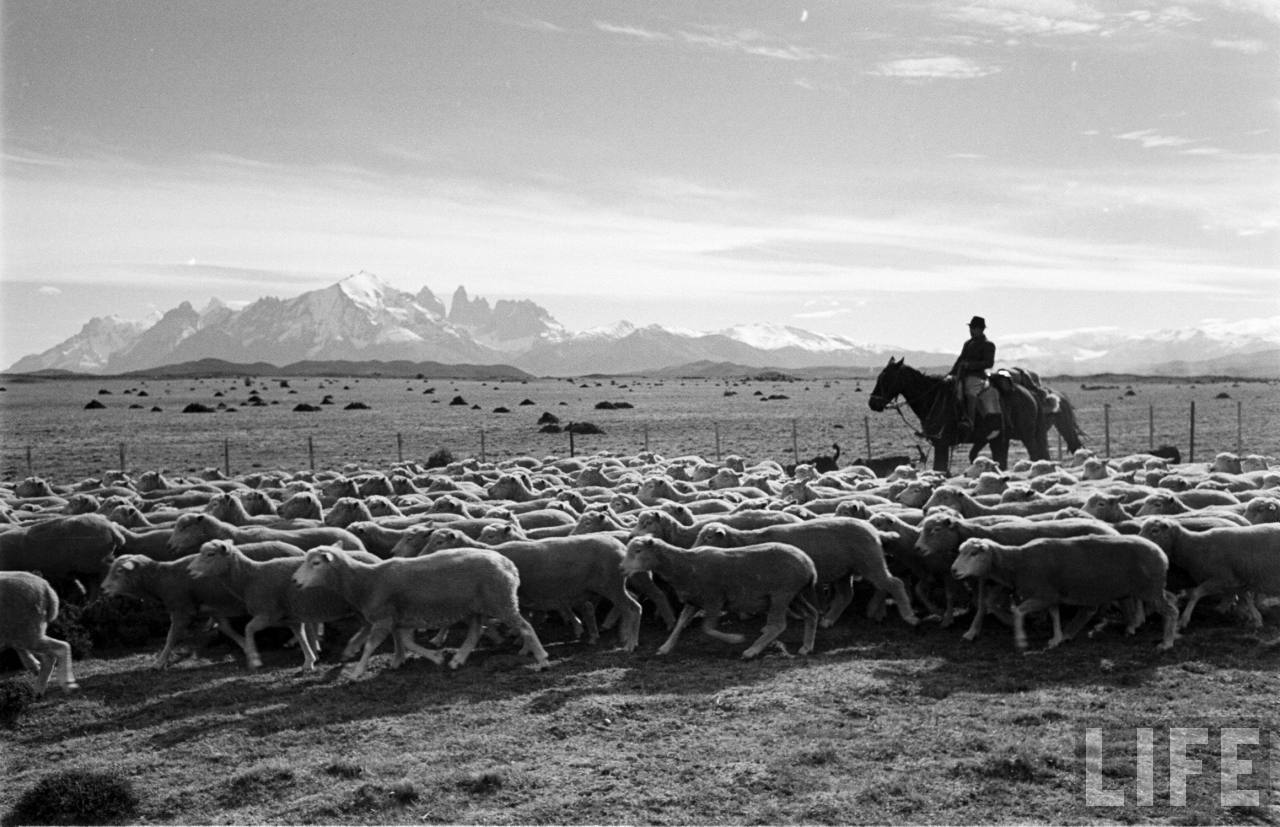 Enterreno - Fotos históricas de chile - fotos antiguas de Chile - Gaucho en la Patagonia, 1950