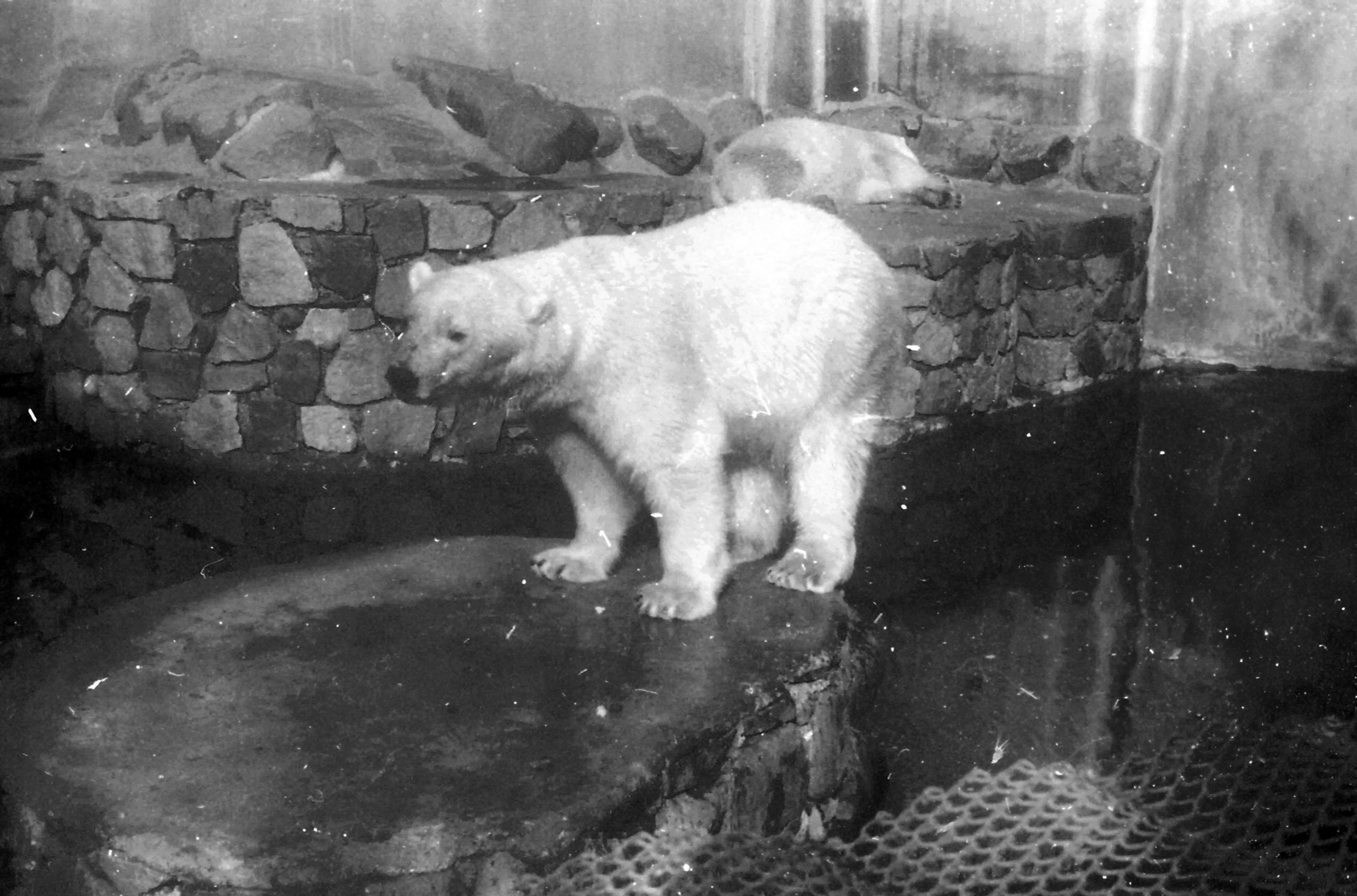 Enterreno - Fotos históricas de chile - fotos antiguas de Chile - Zoológico de Santiago hacia 1970
