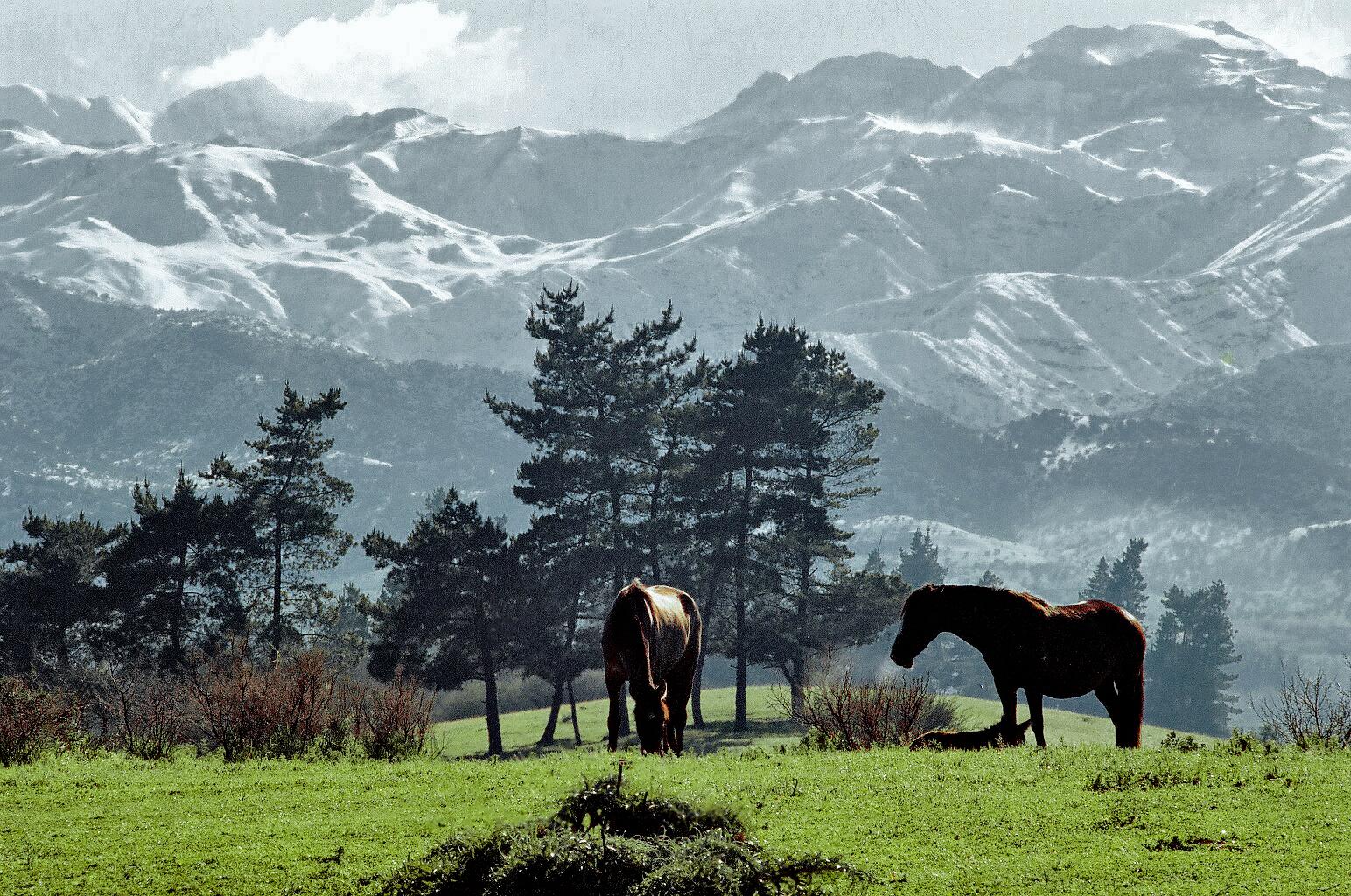 Enterreno - Fotos históricas de chile - fotos antiguas de Chile - La Dehesa en invierno, 1980