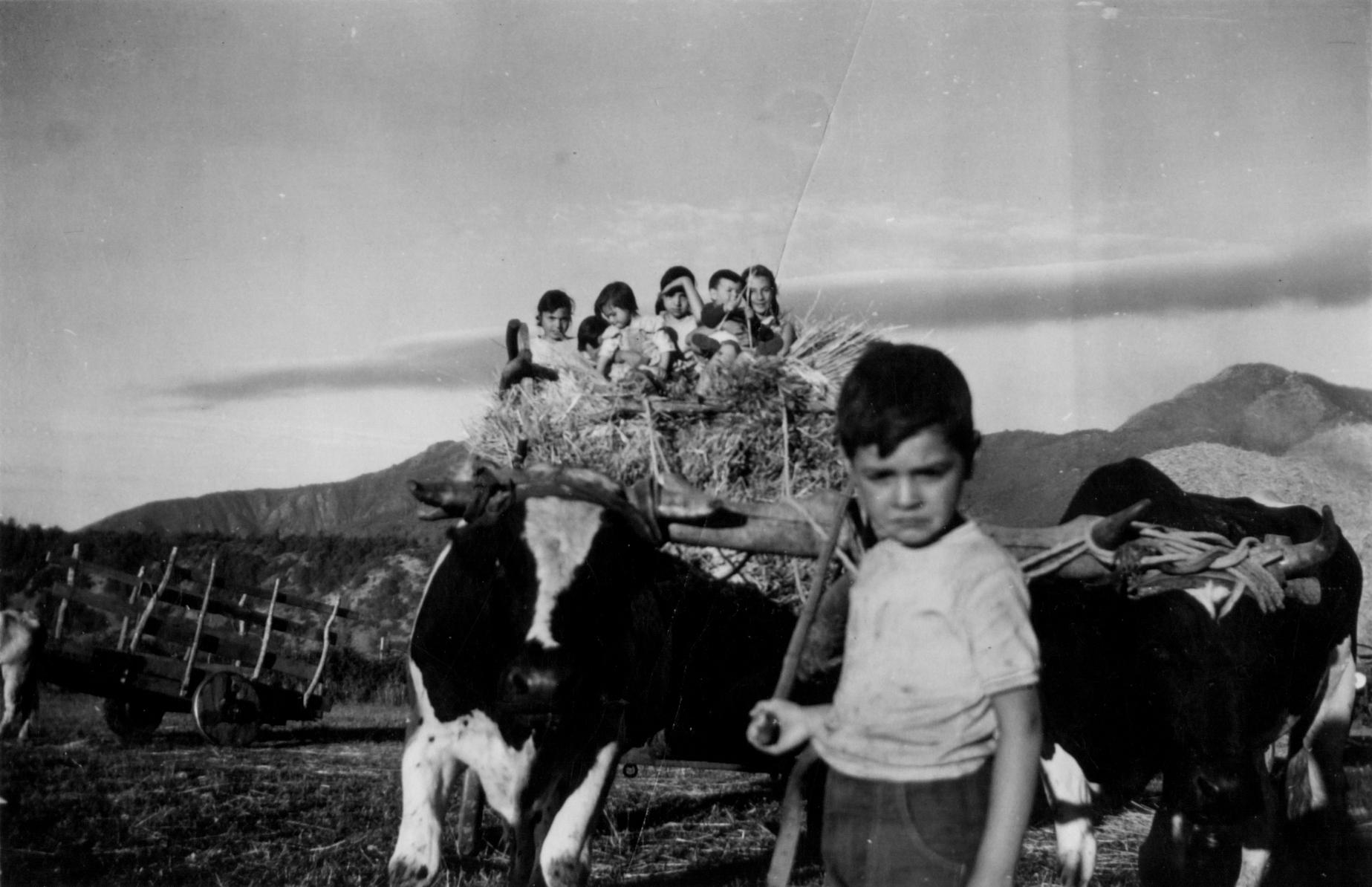 Enterreno - Fotos históricas de chile - fotos antiguas de Chile - Potrero Grande, Curicó en 1960