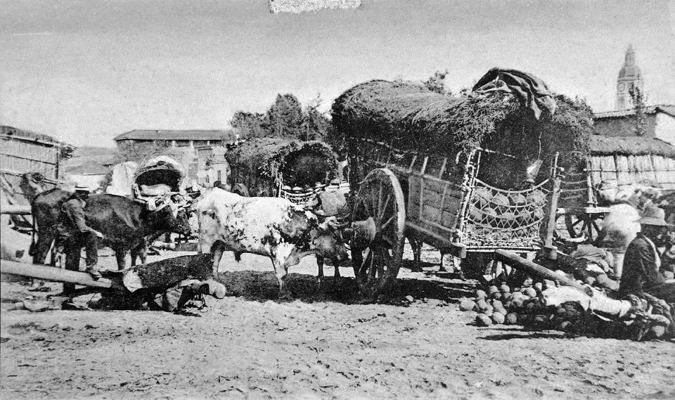 Enterreno - Fotos históricas de chile - fotos antiguas de Chile - Venta de sandías en la Vega de Santiago ca. 1900
