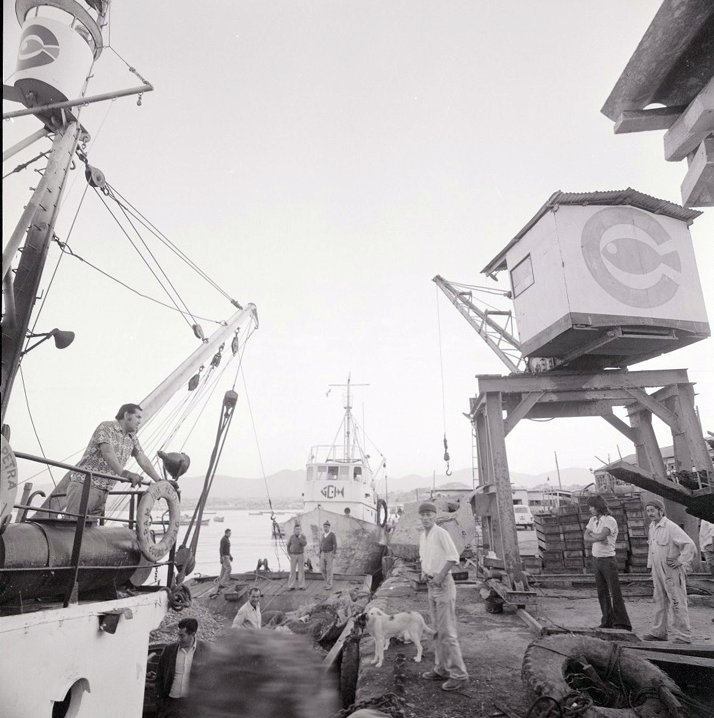 Enterreno - Fotos históricas de chile - fotos antiguas de Chile - Descarga de mariscos en el puerto de Coquimbo, 1976