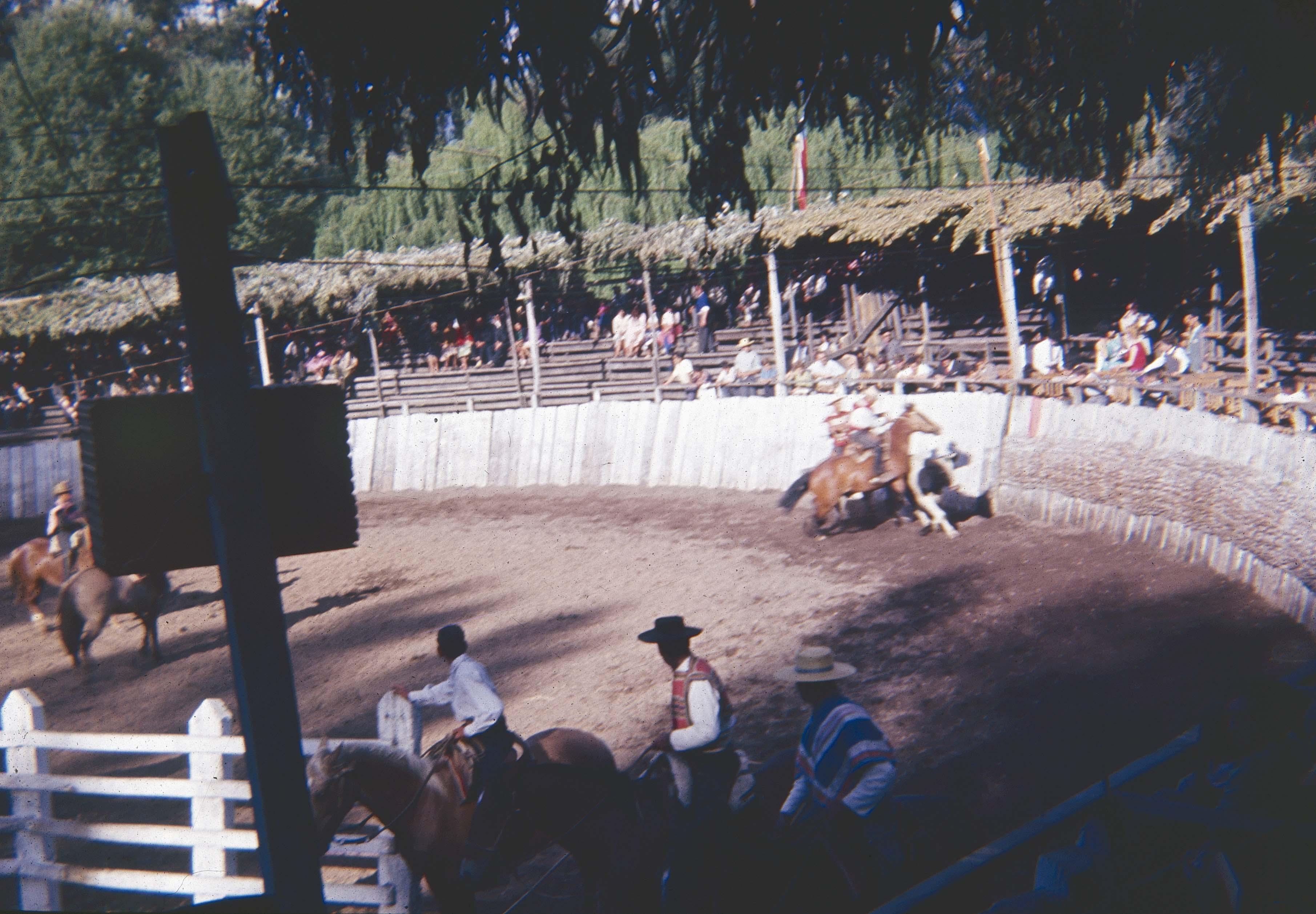 Enterreno - Fotos históricas de chile - fotos antiguas de Chile - Medialuna de Curicó en los 60