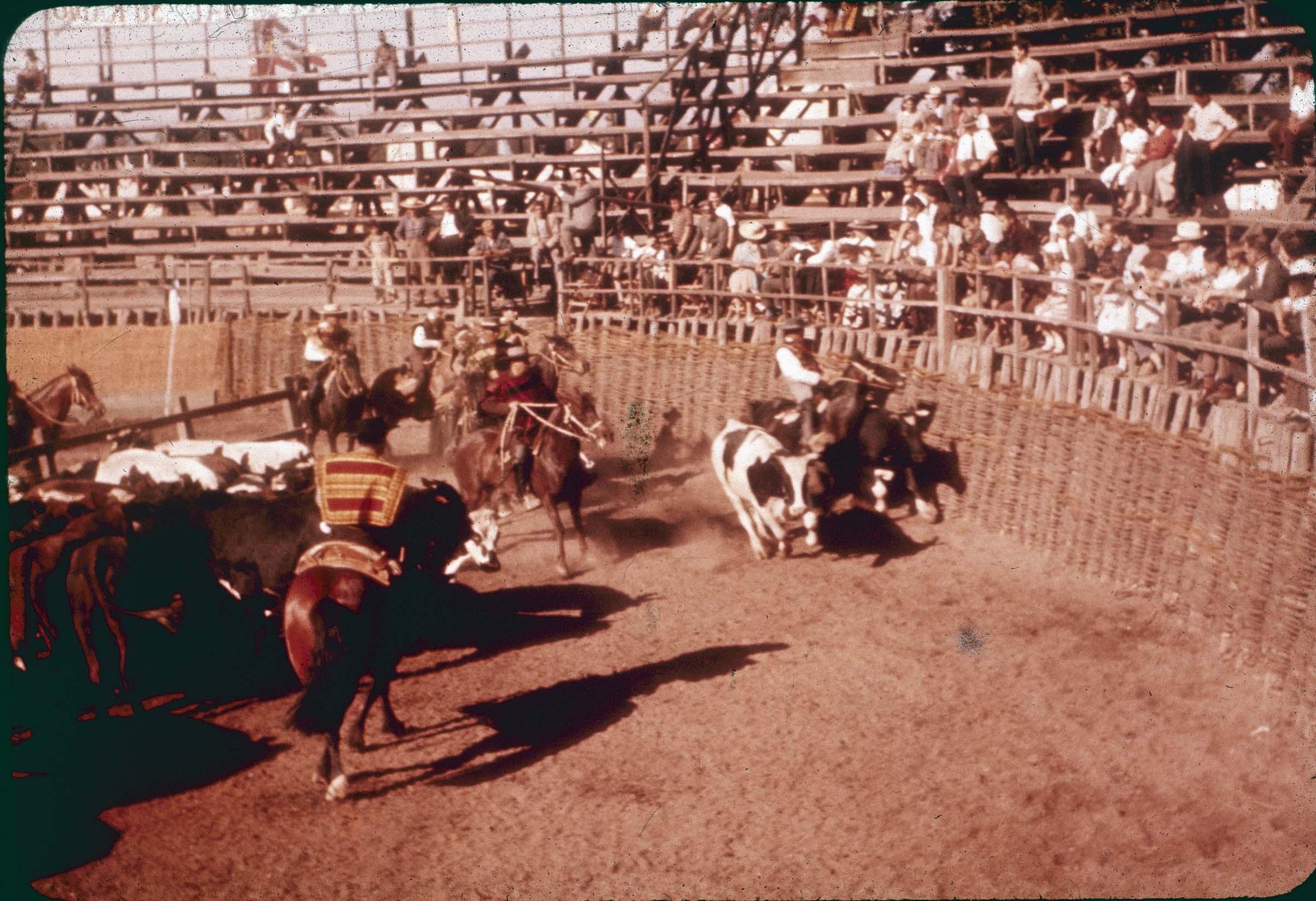 Enterreno - Fotos históricas de chile - fotos antiguas de Chile - Rodeo en Curicó en los 60