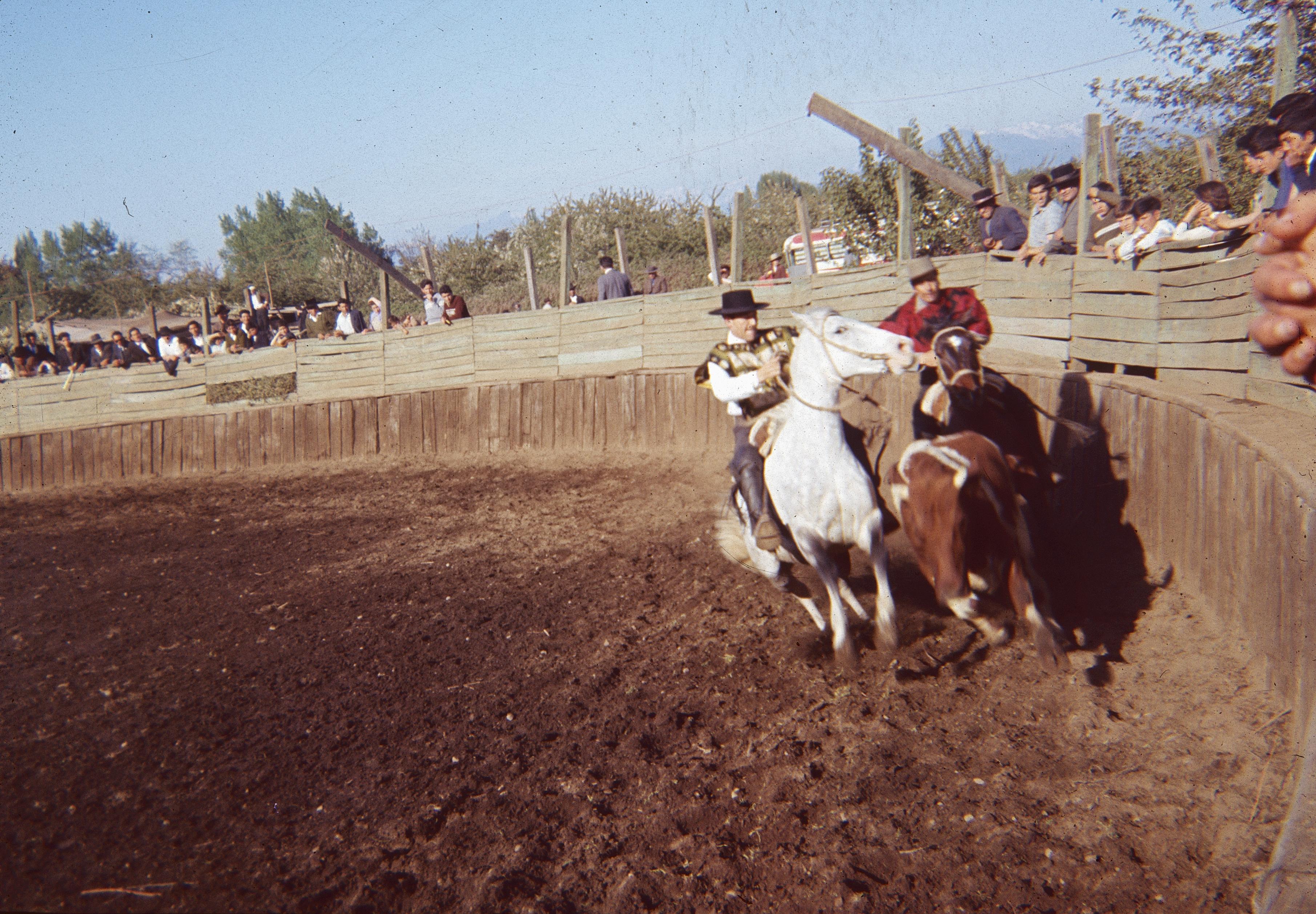 Enterreno - Fotos históricas de chile - fotos antiguas de Chile - Rodeo en Curicó en los años 60