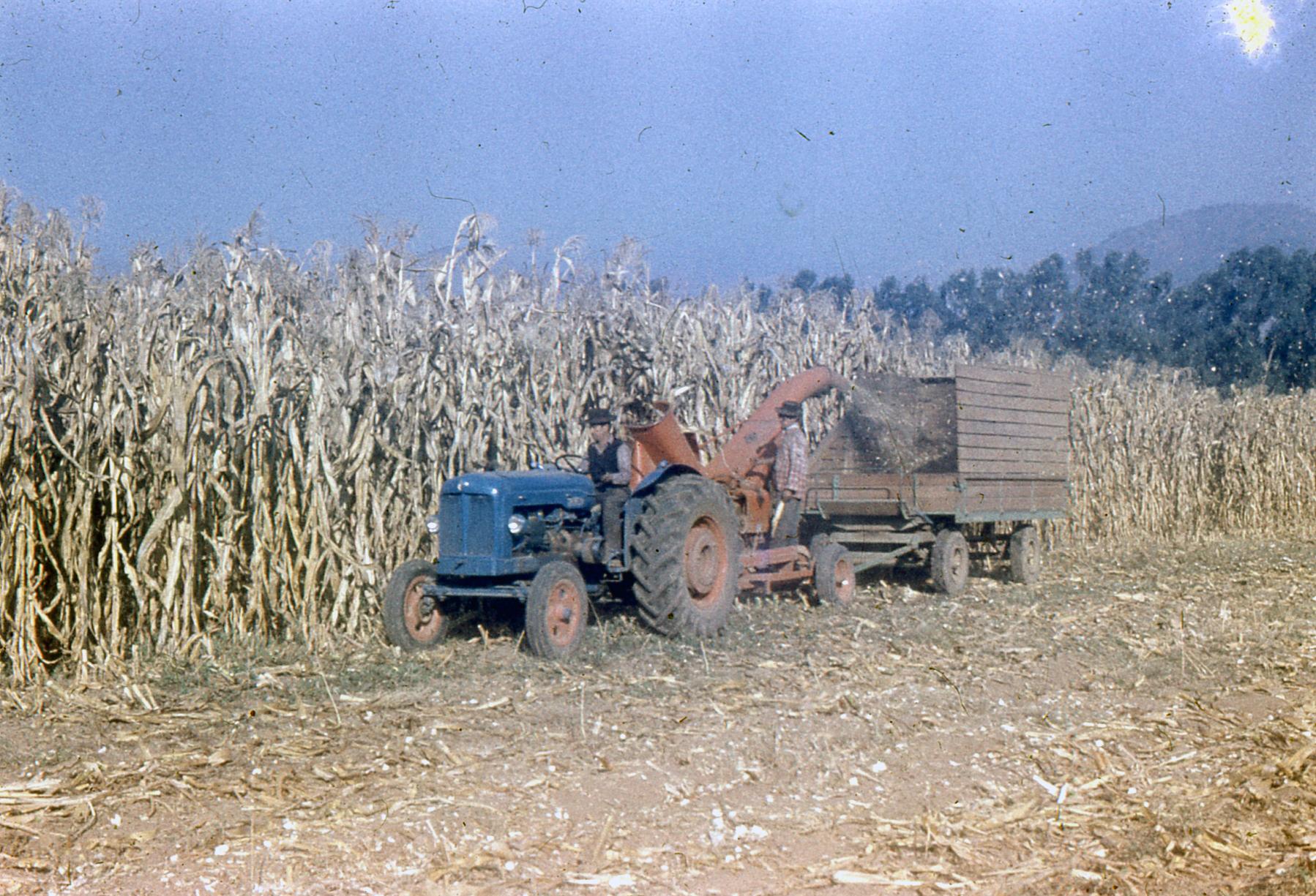 Enterreno - Fotos históricas de chile - fotos antiguas de Chile - Cosecha Maiz para silo en 1955