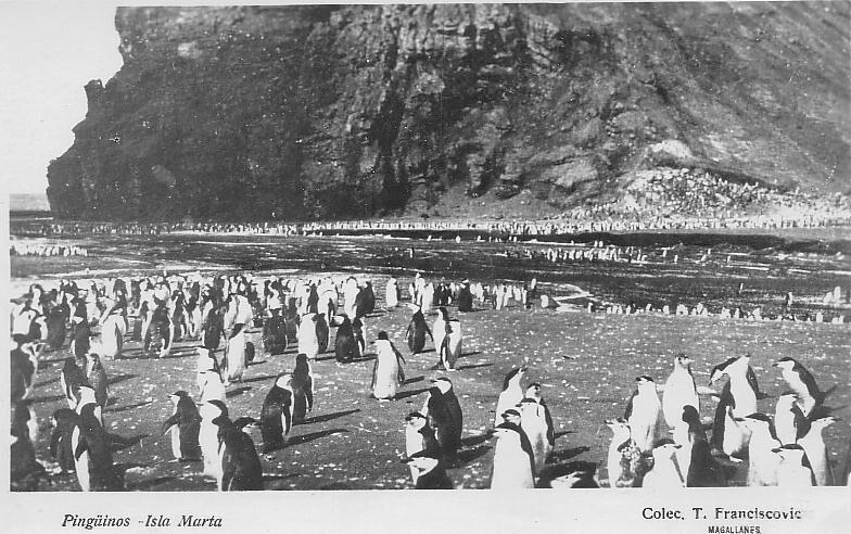 Enterreno - Fotos históricas de chile - fotos antiguas de Chile - Pingüinos en Isla Marta, 1920