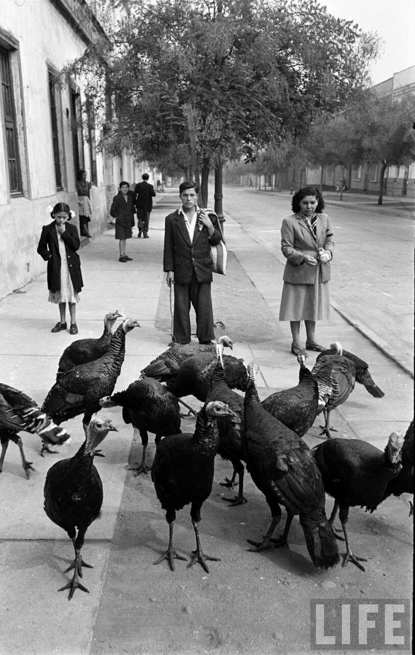 Enterreno - Fotos históricas de chile - fotos antiguas de Chile - Vendedor de pavor en barrio República, 1950