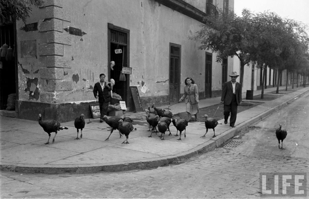 Enterreno - Fotos históricas de chile - fotos antiguas de Chile - Vendedor de pavos en Barrio República, 1950
