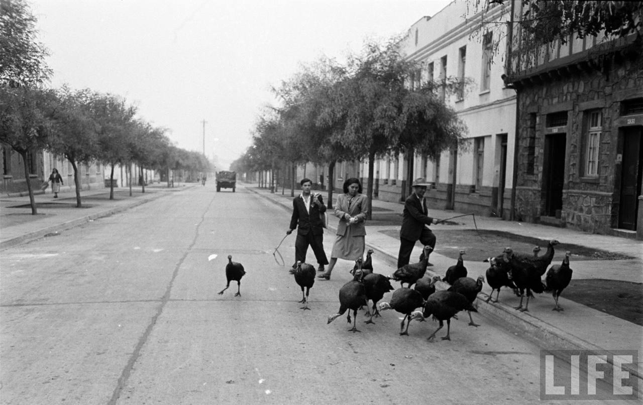 Enterreno - Fotos históricas de chile - fotos antiguas de Chile - Vendedor de pavos en Barrio República, 1950