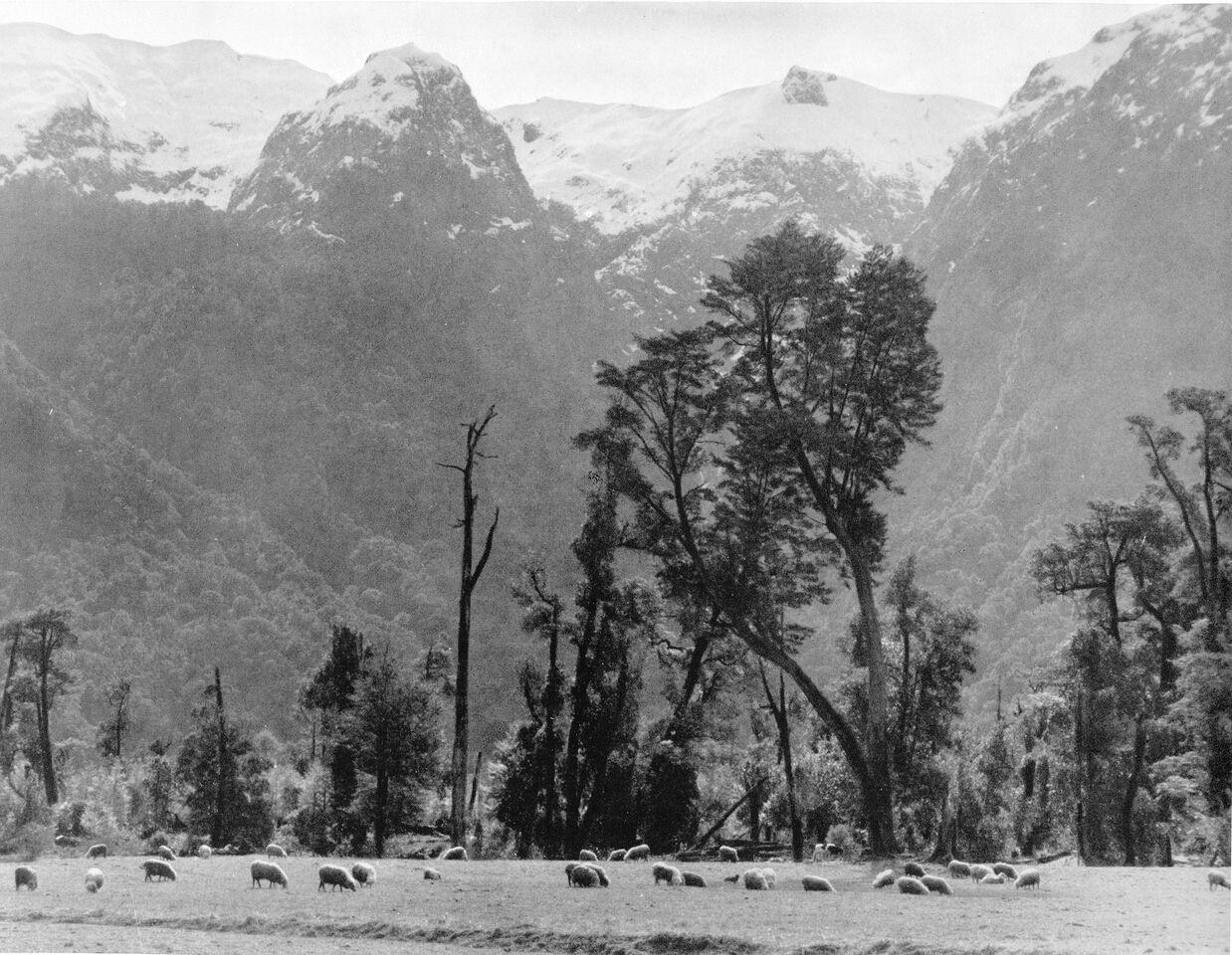 Enterreno - Fotos históricas de chile - fotos antiguas de Chile - Peulla