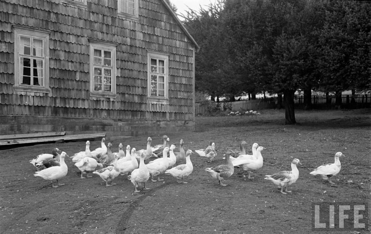 Enterreno - Fotos históricas de chile - fotos antiguas de Chile - Casa Sur de Chile, 1950