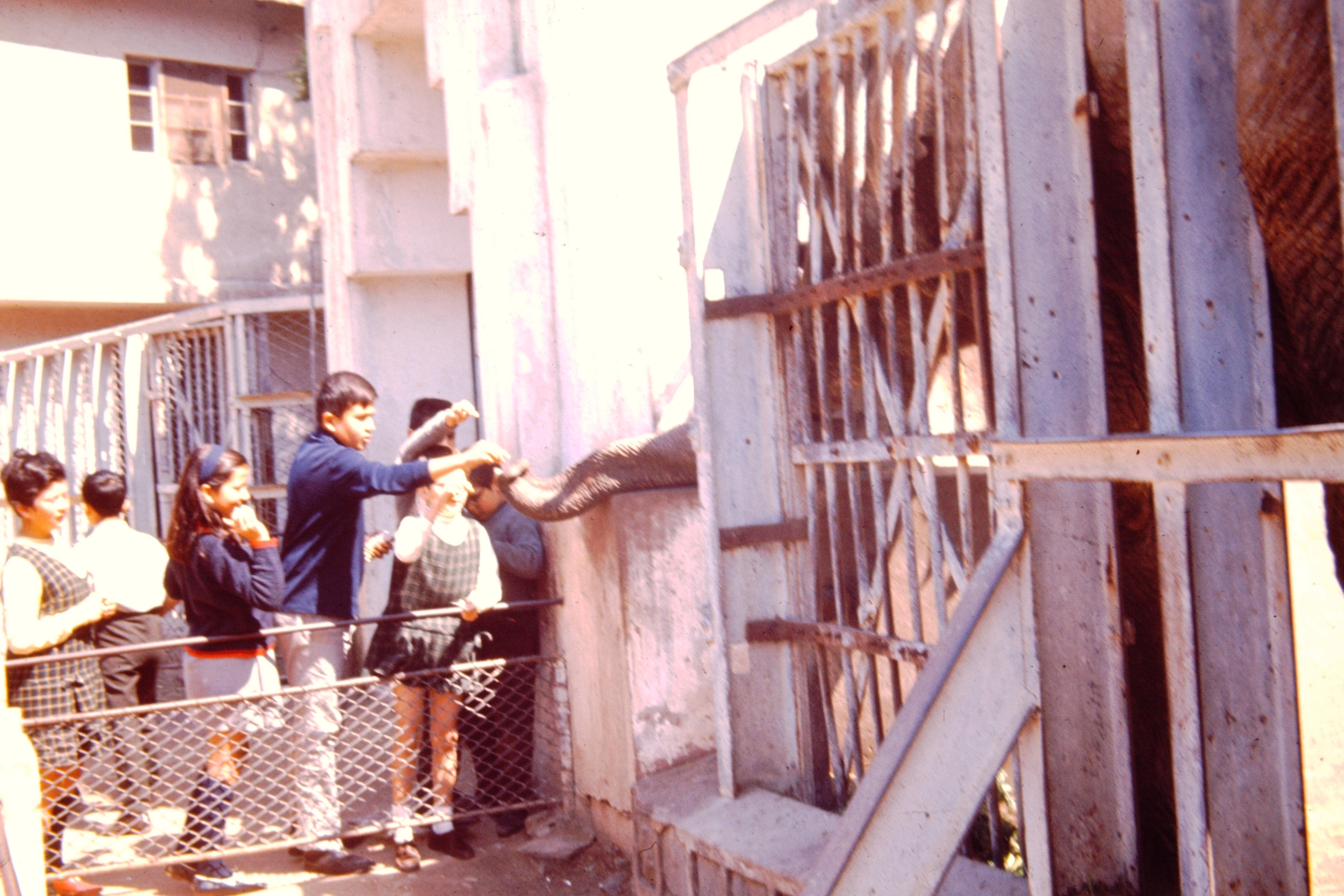 Enterreno - Fotos históricas de chile - fotos antiguas de Chile - Visitando a la elefanta Fresia, 1971