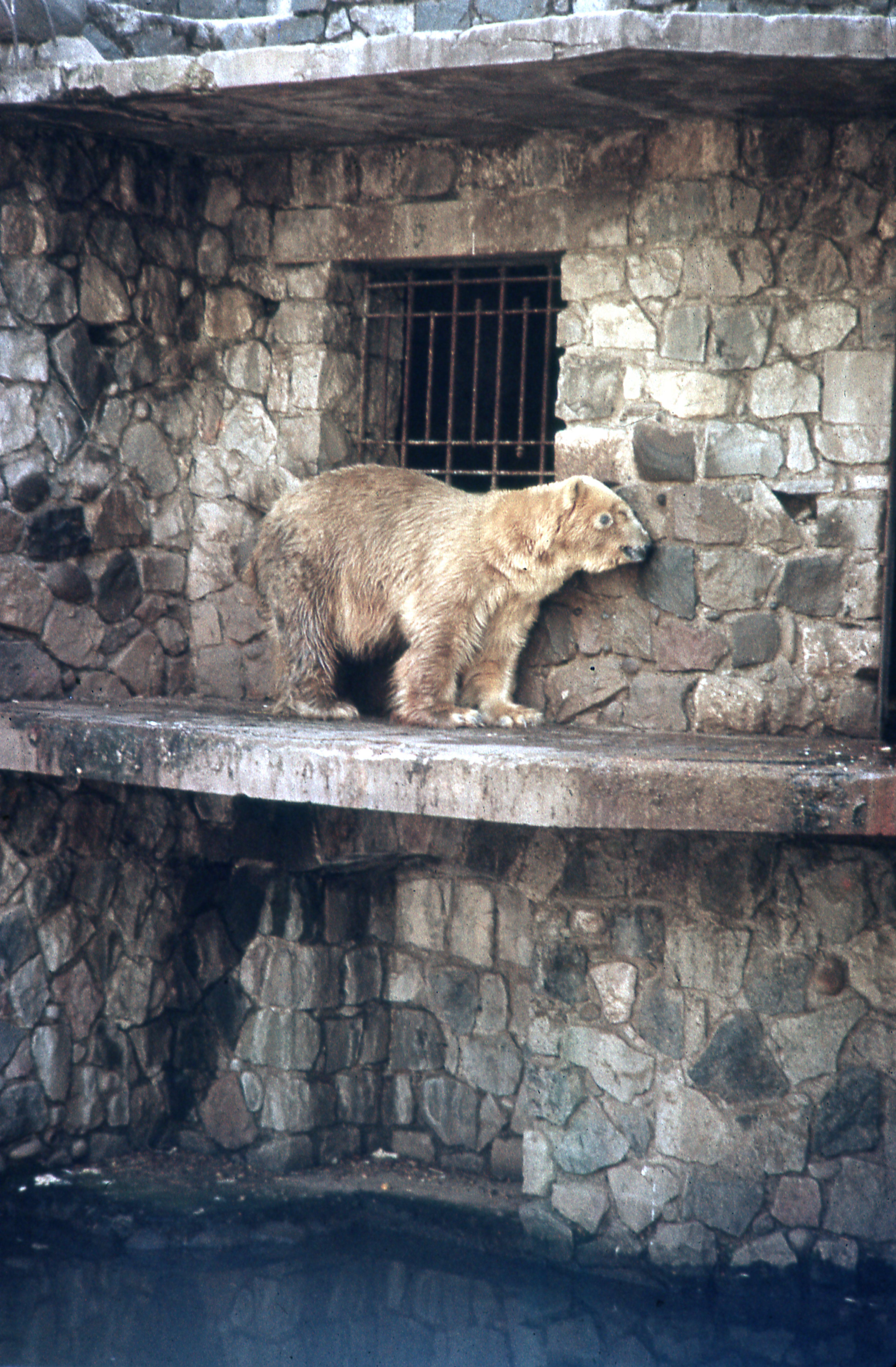 Enterreno - Fotos históricas de chile - fotos antiguas de Chile - Zoológico de Santiago, 1977