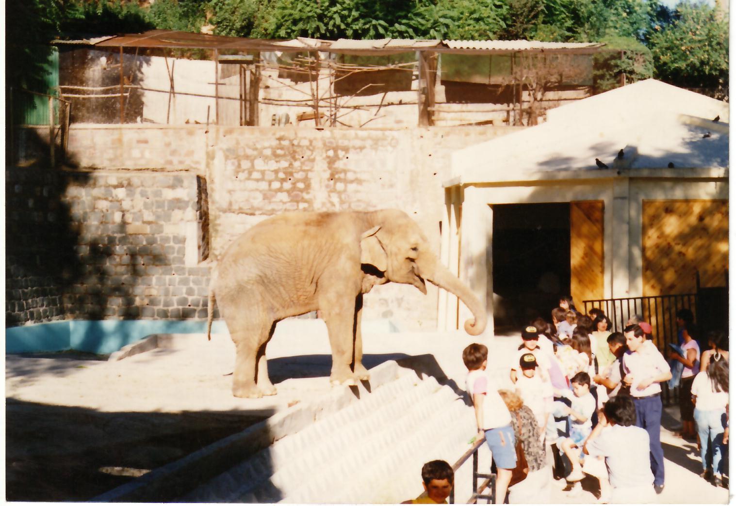 Enterreno - Fotos históricas de chile - fotos antiguas de Chile - Elefanta Fresia, 1989