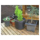 Back Deck: Plants