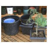 Back Deck: Plants, Pots