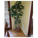 Dining Room:  Plant