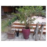 Back Yard:  Small Chinese Clay Pot w/Bush, Large Ceramic Pot w/ Tree