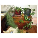 Kitchen Area: Plants, Vintage Side Table