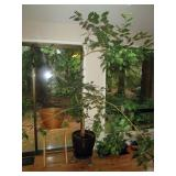 Kitchen Area:  Tree, Plants