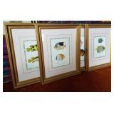 Framed Fish Prints 4