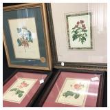 Rose & Botanical Prints 4
