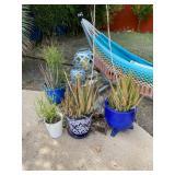 desert potted plants