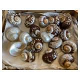 Polished shells