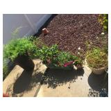 Lots of plants