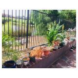 Misc. plants