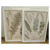 Antique Framed Botanicals