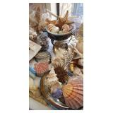 Splendid Seashell Collection