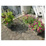 Many Indoor & Outdoor Planters & Plants