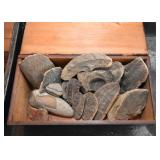Fossils - Fossil Specimens