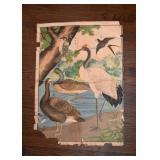 Antique / Vintage Birds Poster