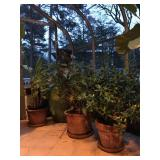 Plants, Planters