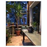 Restoration Hardware Stainless Top Table, Over Sized Antique French Urns, Plants