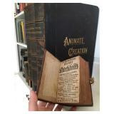 Antique and Rare Books, Martin Luther Bible 1655