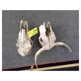 Lot of (2) Bone Head Wall Décor