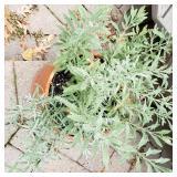 Detailed Terra Cotta Planter