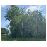 No Reserve Main St 1 Acre Lot in Eagle Bend MN