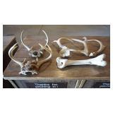 Animal Antlers