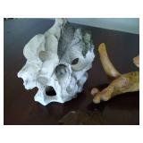 Aquarium Hardscaping Pieces