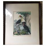 1854 Tropical Bird Print in Frame