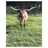 TX Longhorn