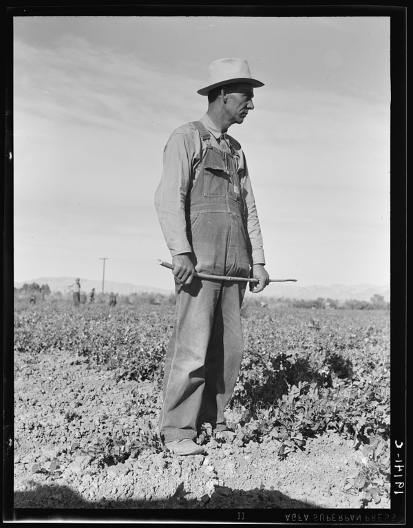 Row boss. Formerly a pea picker. Near Calipatria, California