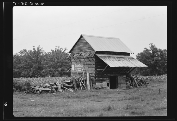 The tobacco barn, a distinctive American architectural form. Note tobacco growing in field behind barn. Person County, North Carolina