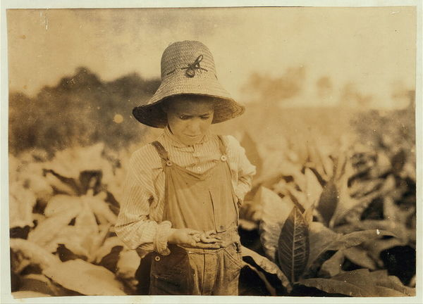 """Ora Fugate, 10 years old worming tobacco. They said they do not worm in middle of day when hot, but work right through when """"suckering."""