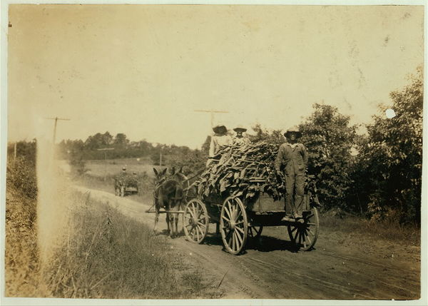 Hauling tobacco.  Location: Hebbardsville vicinity, Kentucky																  	/ 					  						  	Lewis W. Hine.